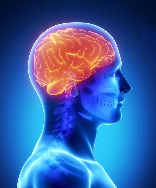 ויטמיני B ושמירה על מערכת העצבים
