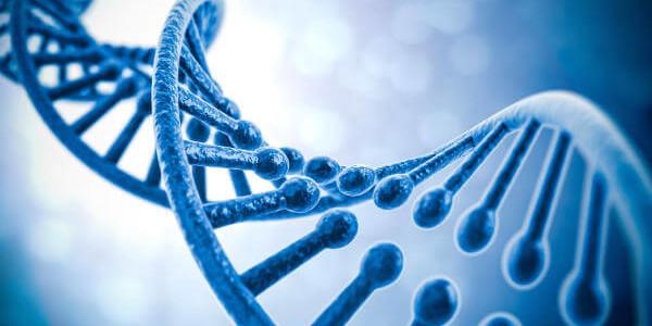 אומגה 3 צמחית – ספרות מקצועית ומחקרים קליניים