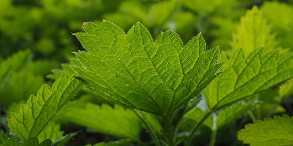 קרונקס+ רשימת צמחים