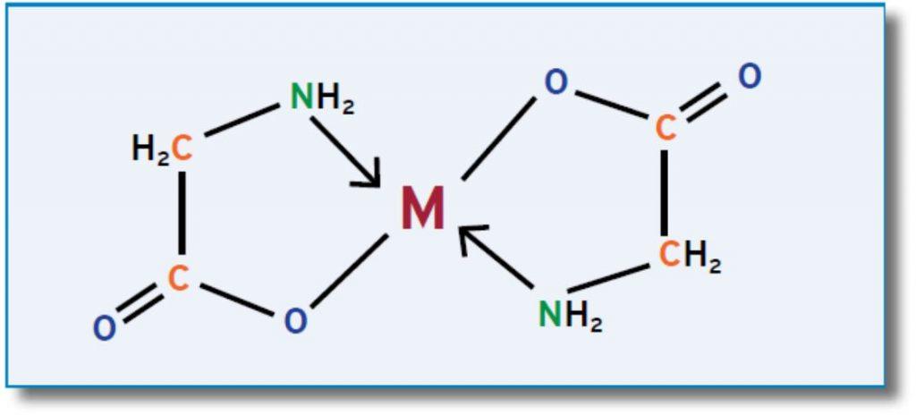 מבנה של מינרל המקושר לשתי חומצות אמינו מסוג גליצין נקרא - ביסגליצינאט
